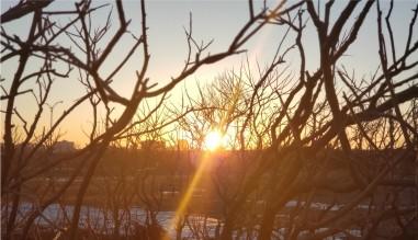 sol-arboles