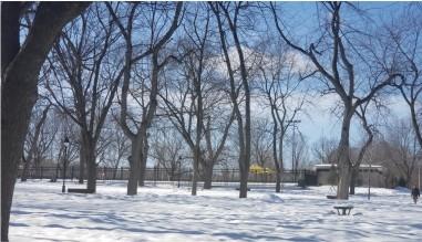 Nieve-arboles